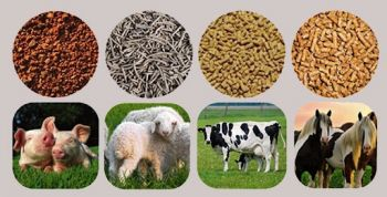 Thức ăn chăn nuôi